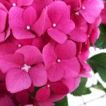 花をメデル