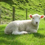 悩める子羊クリエーターの背中を押す。私ってRock?