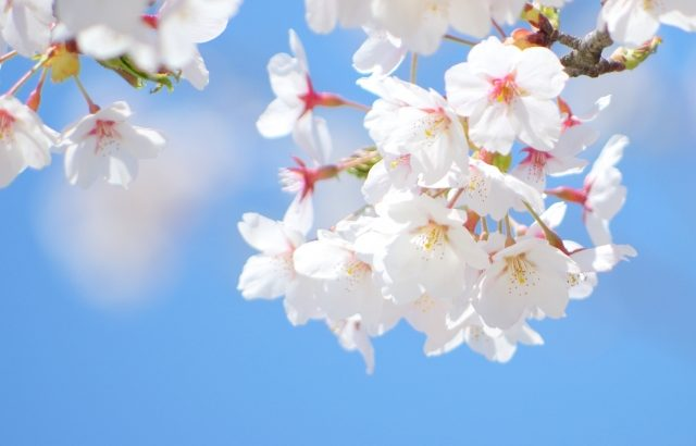 入学式と花まつりの記憶